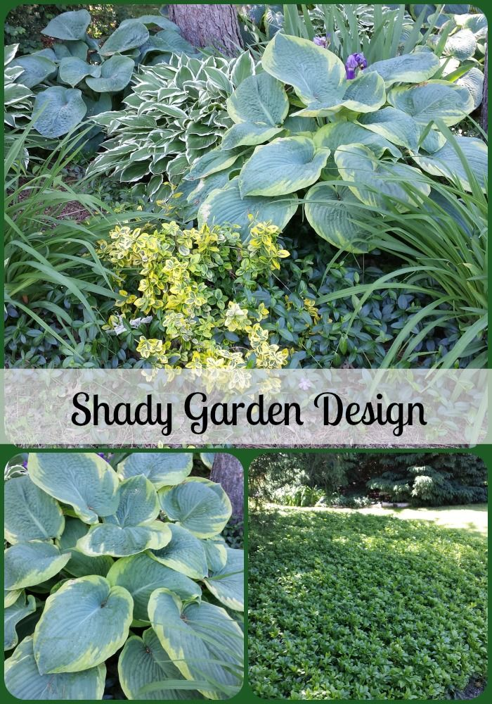 25 Best Ideas About Periwinkle Ground Cover On Pinterest Myrtle