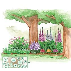 25 Best Ideas About Shade Garden Plants On Pinterest Shade