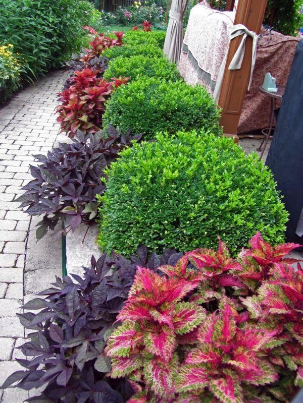 green velvet boxwood and