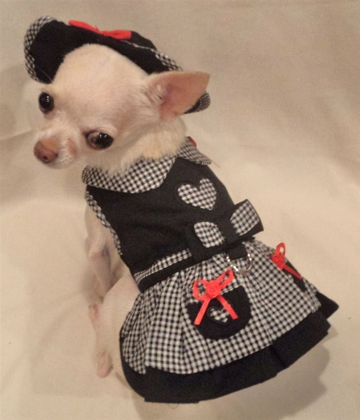 1000+ ideas about Chihuahua Clothes on Pinterest