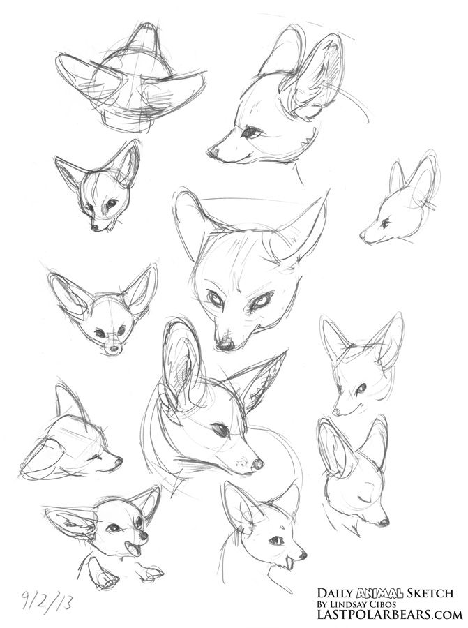 76 Best Fox Sketches Images