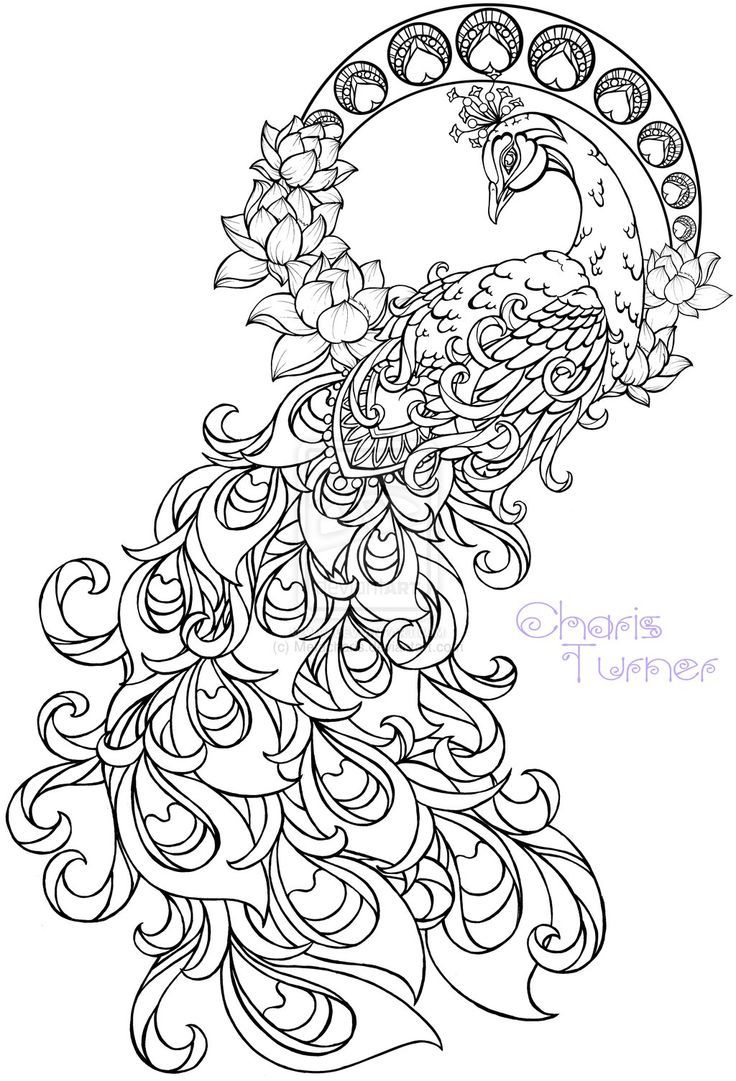 Realistic peacock coloring pages free coloring page