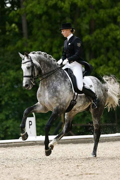 25 Best Ideas About Dressage Horses On Pinterest