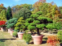 7 best images about Japanese Garden Nursery on Pinterest ...