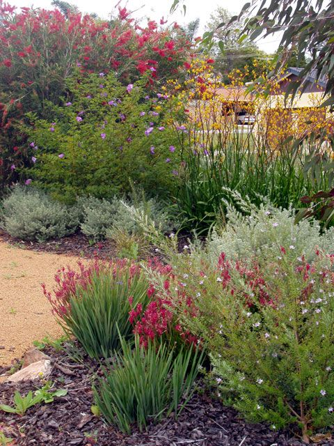 Best 25 Bush Garden Ideas On Pinterest Bush Bush Flowering