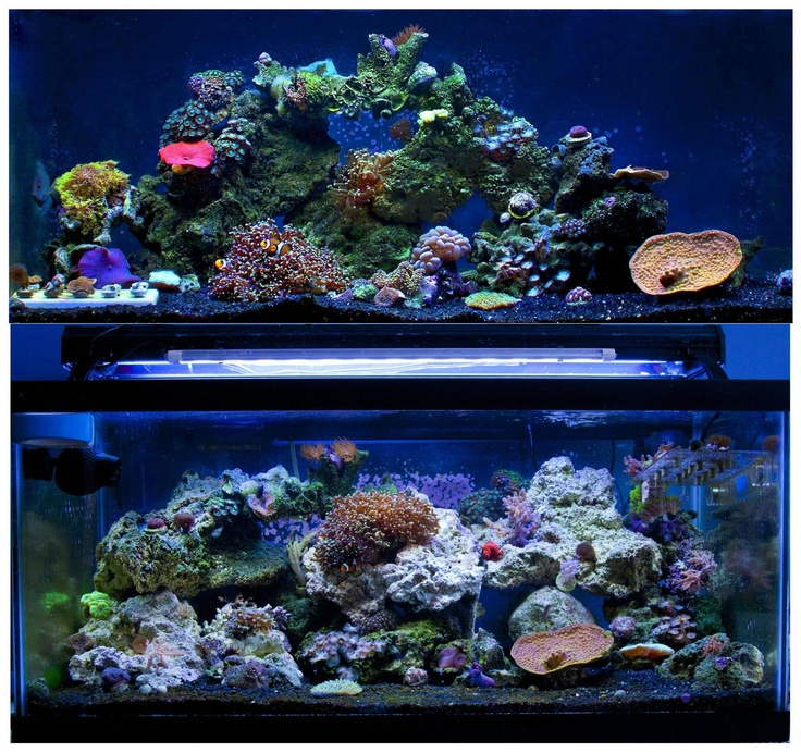 17 Best Images About Reef Tank Inspiration On Pinterest