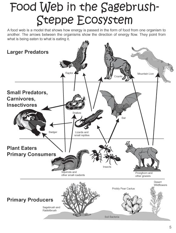 25 best images about Animal Adaptation on Pinterest