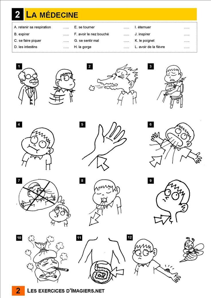 25+ best ideas about Partie du corps humain on Pinterest