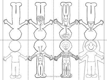 Human body systems, Body systems and Human body on Pinterest