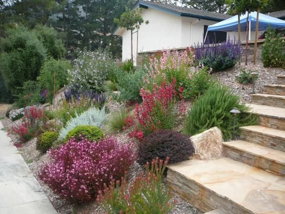 25 Best Ideas About Xeriscape California On Pinterest Water