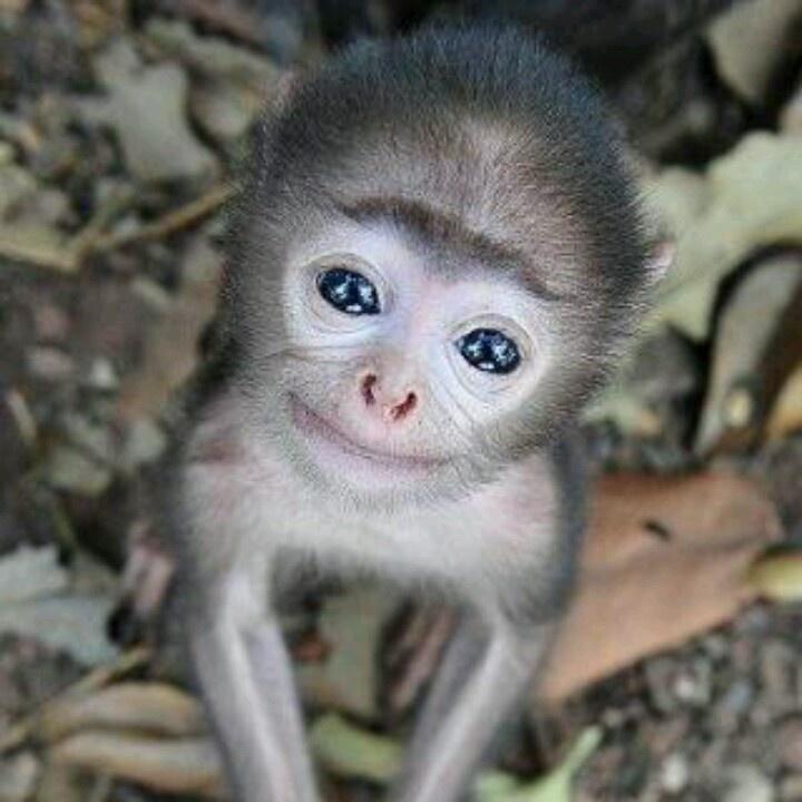 A Smiling Baby Monkey   BABY ANIMALS  Pinterest