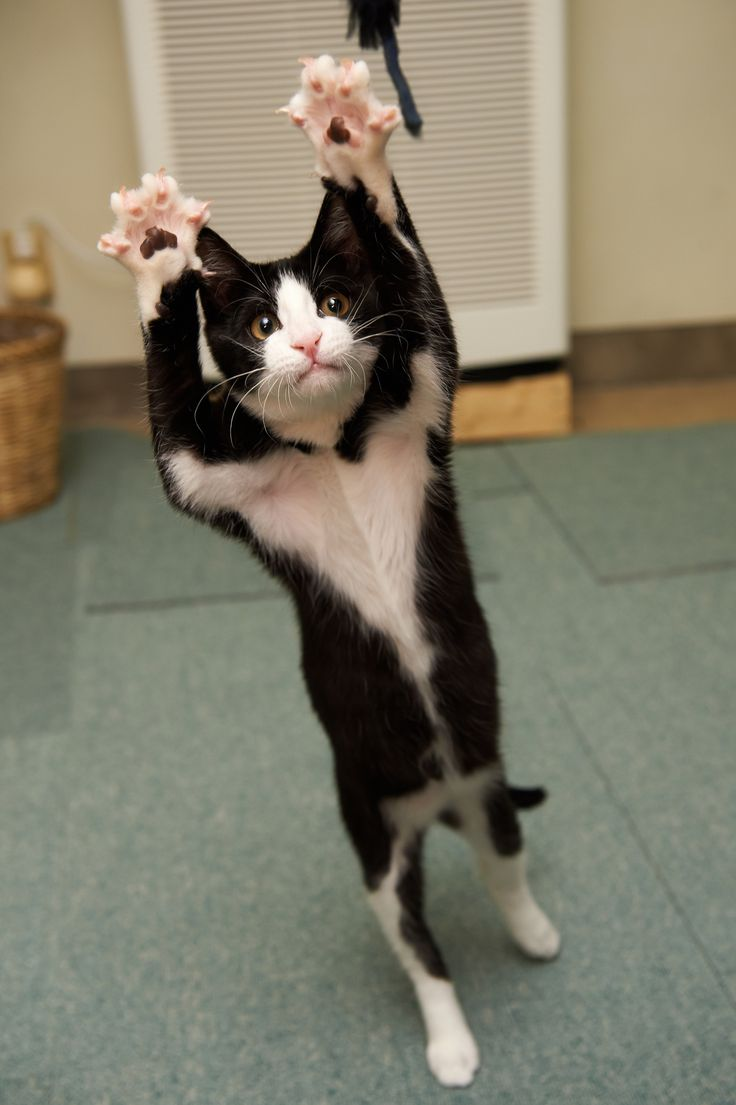 Throw Your Paws In The Air Like You Dont Care Kittehs