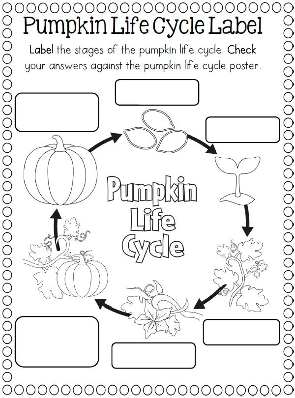 Plant Life Cycle Coloring Pages Pumpkin Coloring Pages