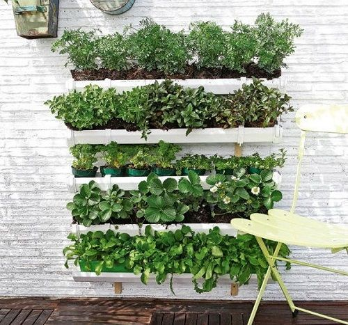 42 best images about Huerta casera on Pinterest  Growing