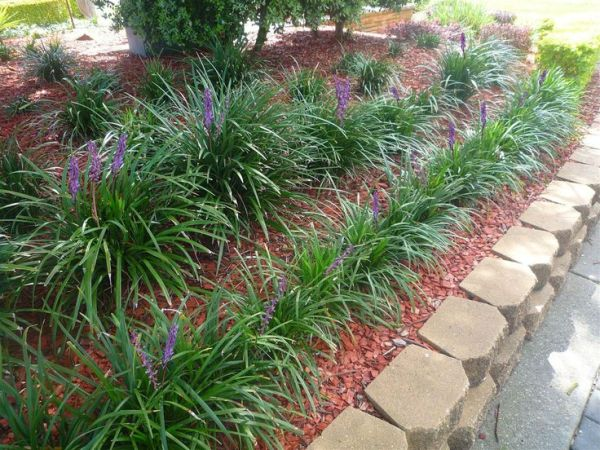25 Tiles Landscaping With Liriope Pictures And Ideas On Pro Landscape