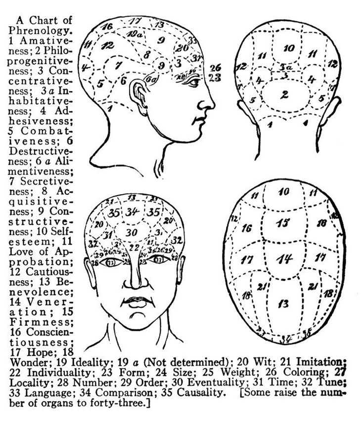 17 Best images about Phrenology (1790-1911) on Pinterest