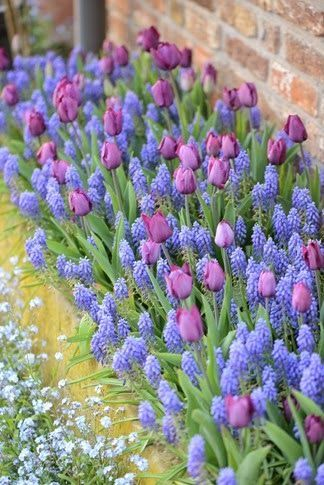 25 Best Ideas About Spring Garden On Pinterest Flowers Garden