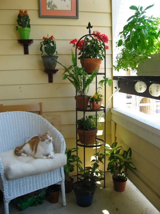25 Best Ideas About Apartment Patio Gardens On Pinterest