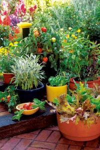 40 Best images about Garden ~ Containers on Pinterest ...
