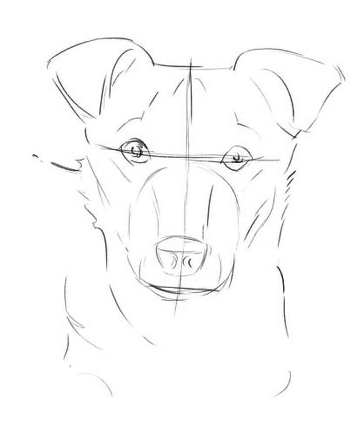 17 Best ideas about Dog Drawing Easy on Pinterest