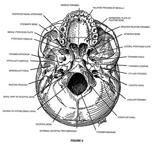 45 best anatomy lab images on Pinterest