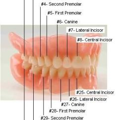 Healthy Heart Diagram 1999 Ford Taurus Engine Teeth And Numbers On Pinterest