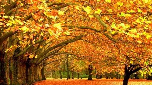 Late Fall Desktop Wallpaper Fall In Savannah Ga Fall Autumn Harvest Season