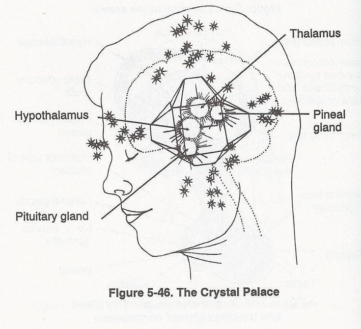 25+ best ideas about Anterior Pituitary on Pinterest