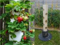 PVC pipe vertical strawberry plant container garden how to ...