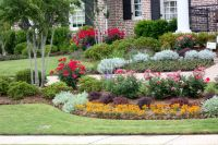 landscape with Knock-out roses, zinnias, dusty miller ...