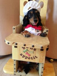 Bailey Chairs for dogs with Canine Megaesophagus www ...