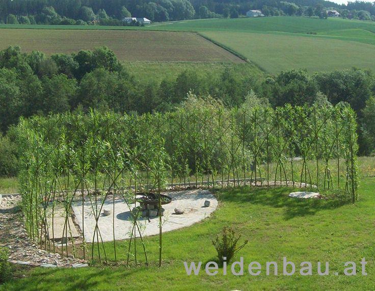 Lebender Sichtschutzzaun Windschutz Privatgarten O