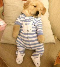 Cute Puppies In Clothes | www.pixshark.com - Images ...