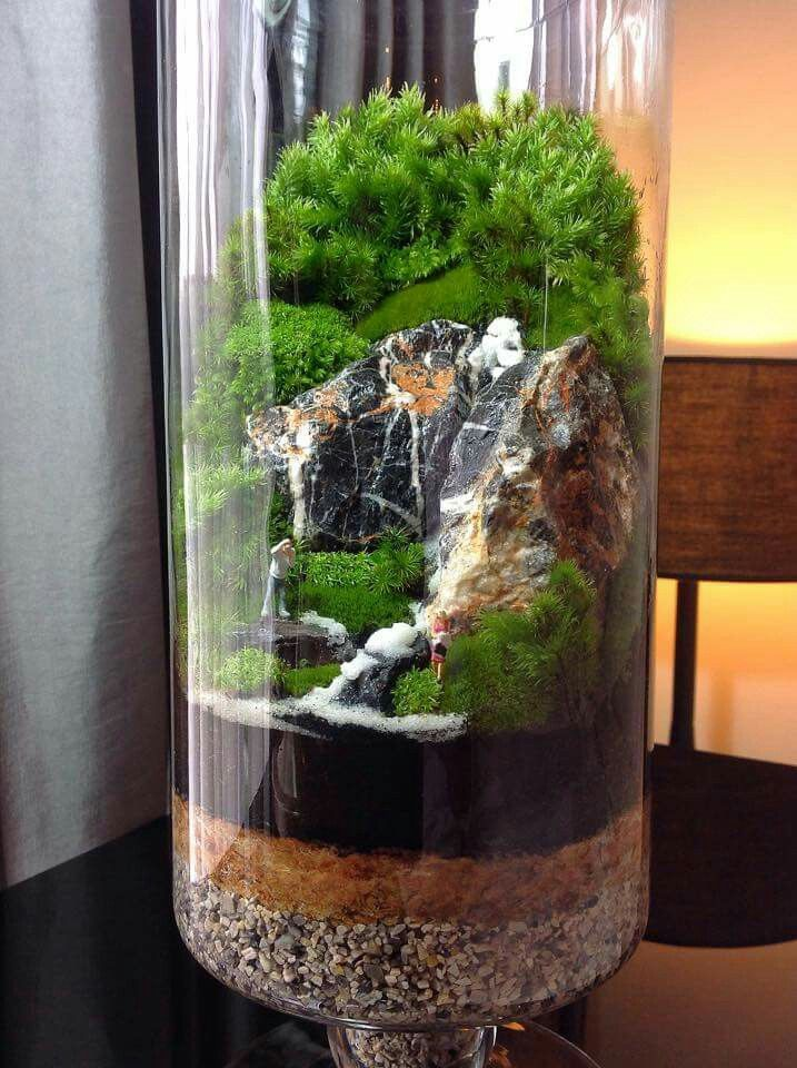 25 Best Ideas About Terrarium Plants On Pinterest Terrarium Succulent Terrarium And