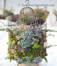 25+ best ideas about Birdcage planter on Pinterest | Bird ...