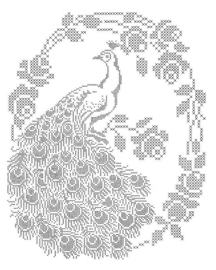 243 best images about PEACOCK line drawings on Pinterest