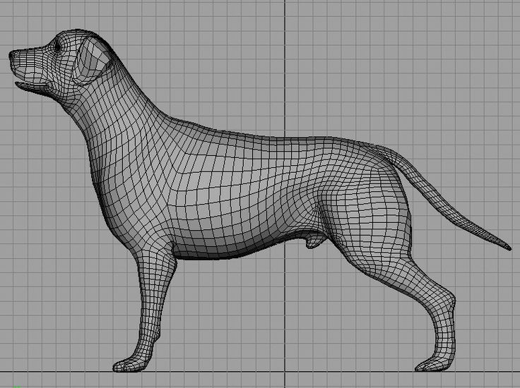 61 best images about References Topology Animals 3D on