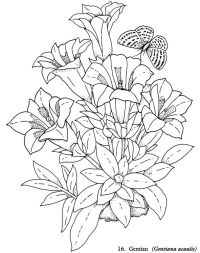 Welcome to Dover Publications - Redout Flowers Coloring ...
