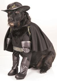 25+ best ideas about Pet halloween costumes on Pinterest