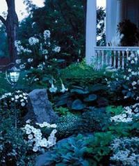 25+ best ideas about Night Garden on Pinterest | Moon ...
