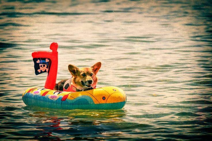 43 best images about furry boating friends on pinterest
