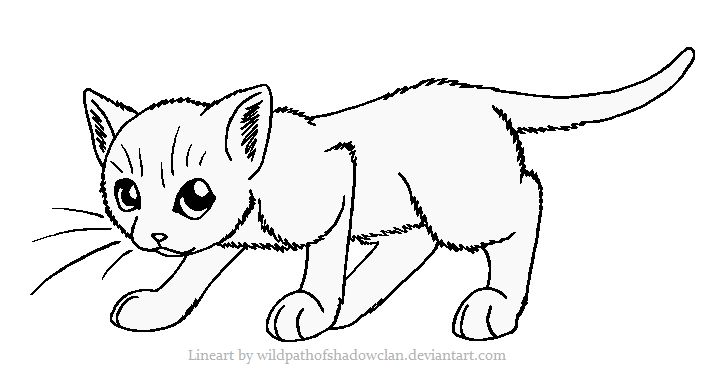 21 best images about Warrior cat coloring pages on Pinterest