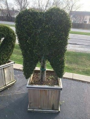 How the bushes are shaped around a #dental clinic.