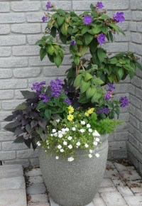 tall summer planter FOR FRONT DOOR ENTRY | My Giardino ...