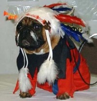 17 Best images about Dog costumes on Pinterest | Gladiator ...