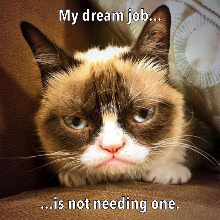 Career counseling with grumpy cat grumpy cat