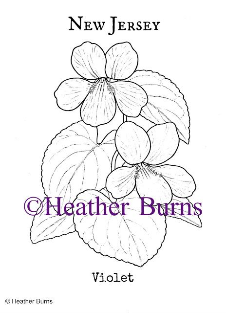 1000+ images about State Flower Coloring Book on Pinterest