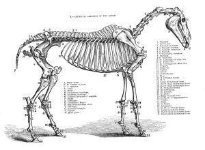 36 best funny horses images on Pinterest