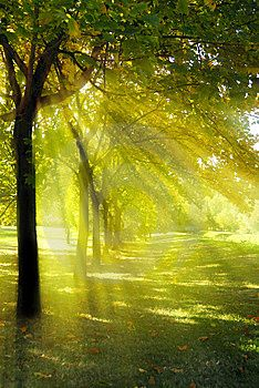 Beautiful Fall Scenes Wallpaper 47 Best Images About Rayos De Sol On Pinterest Trees