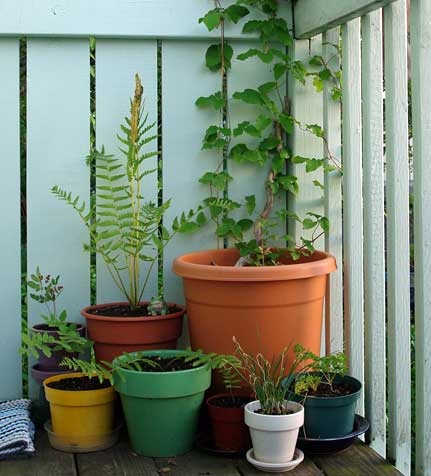52 Best Images About Balcony Gardening Ideas On Pinterest